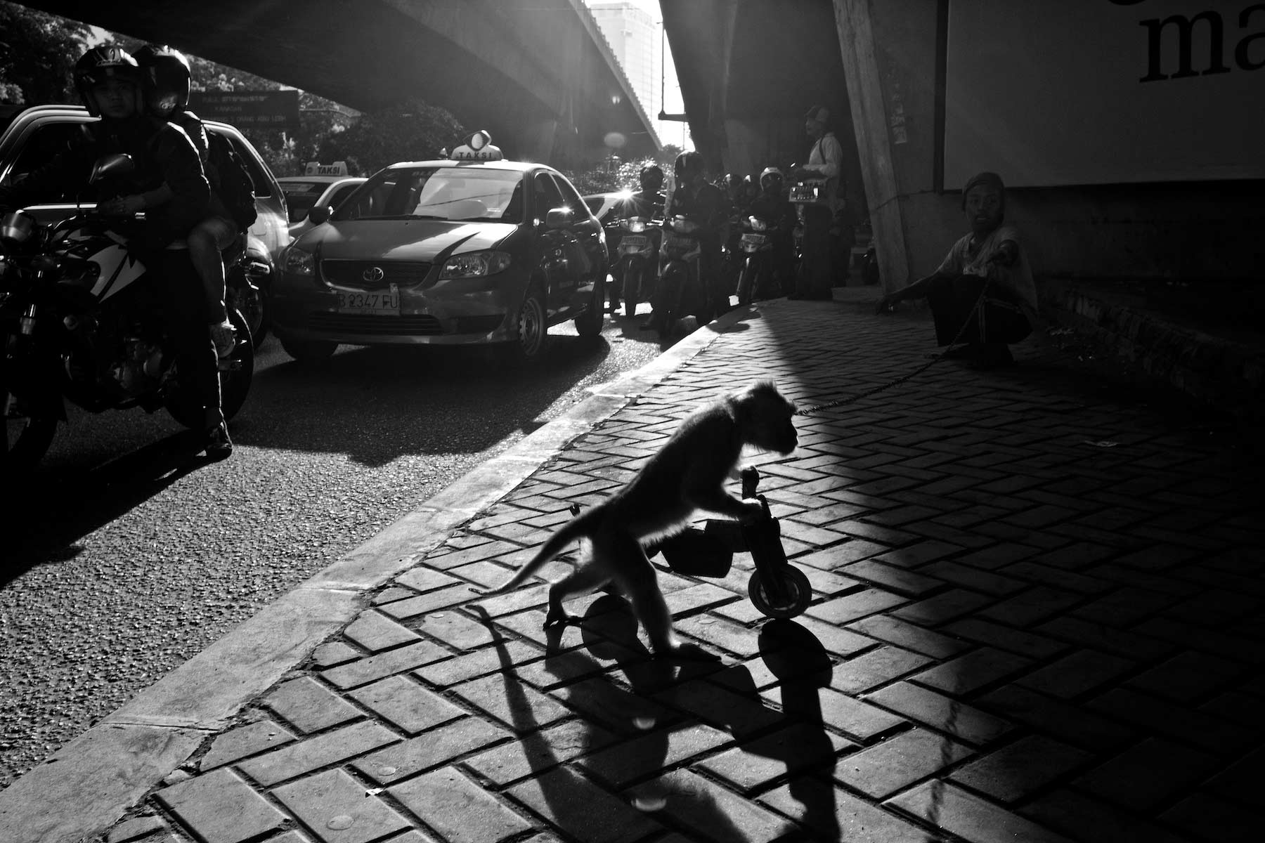 Performing Monkey on bicycle Jakarta, Indonesia